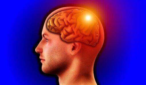 За что отвечает каждый отдел головного мозга: функции зон, что в ответе за память и речь?